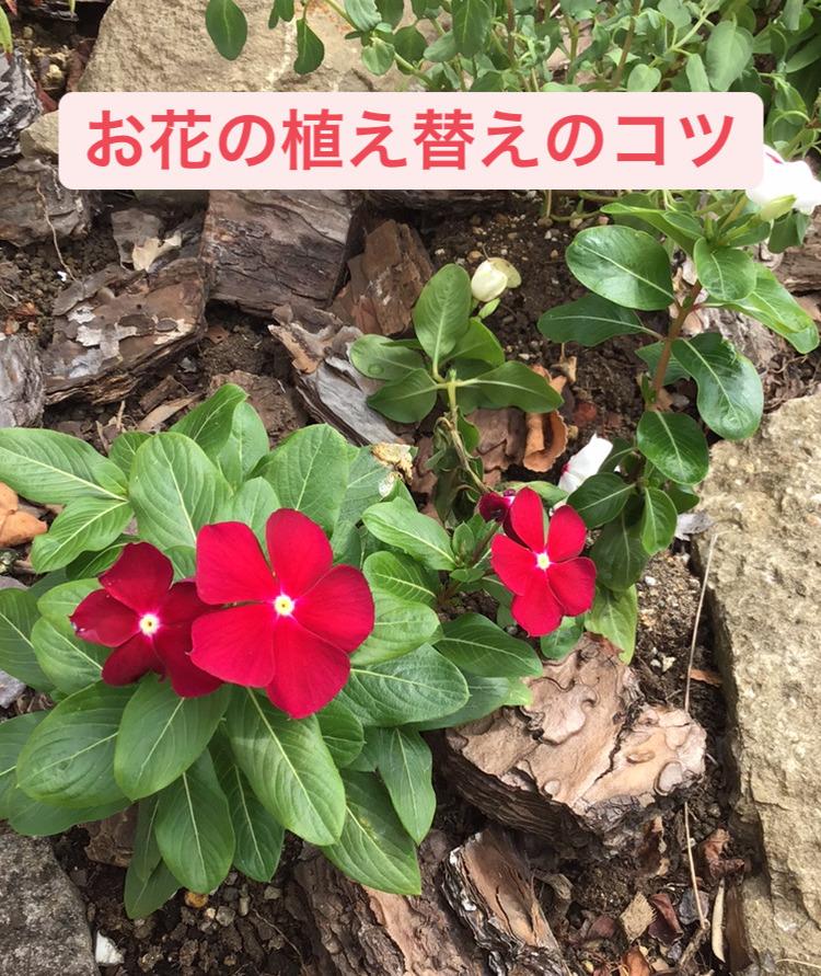 お花の植え替えのコツ🌼