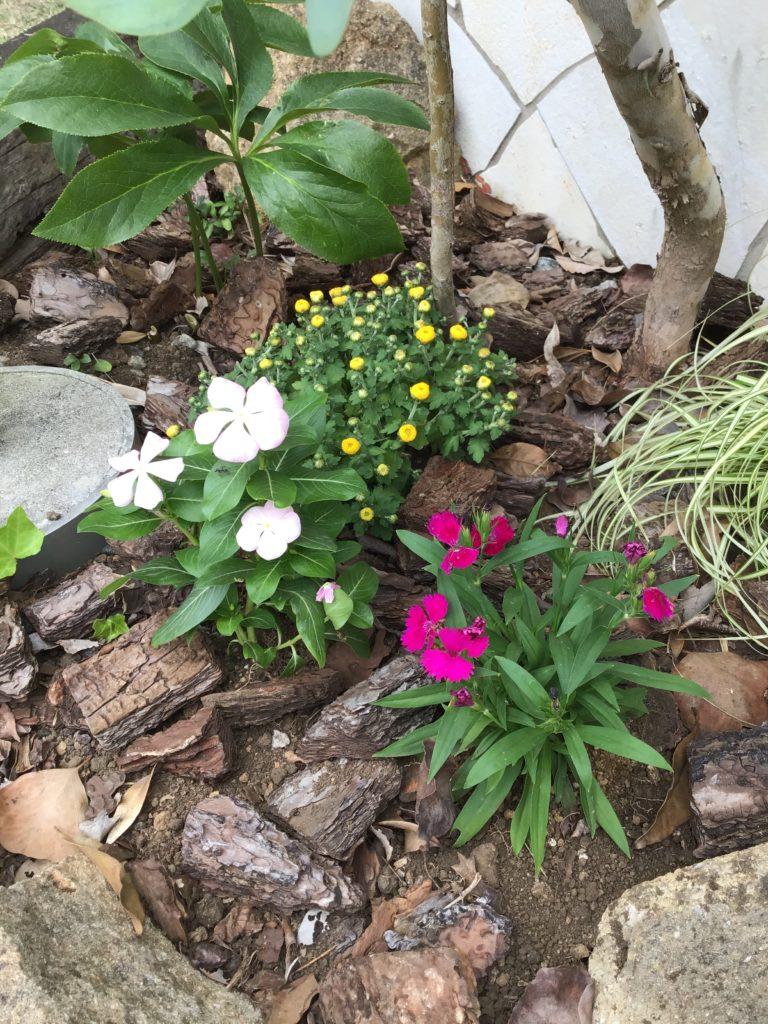 お花の植え替えをしました🌼
