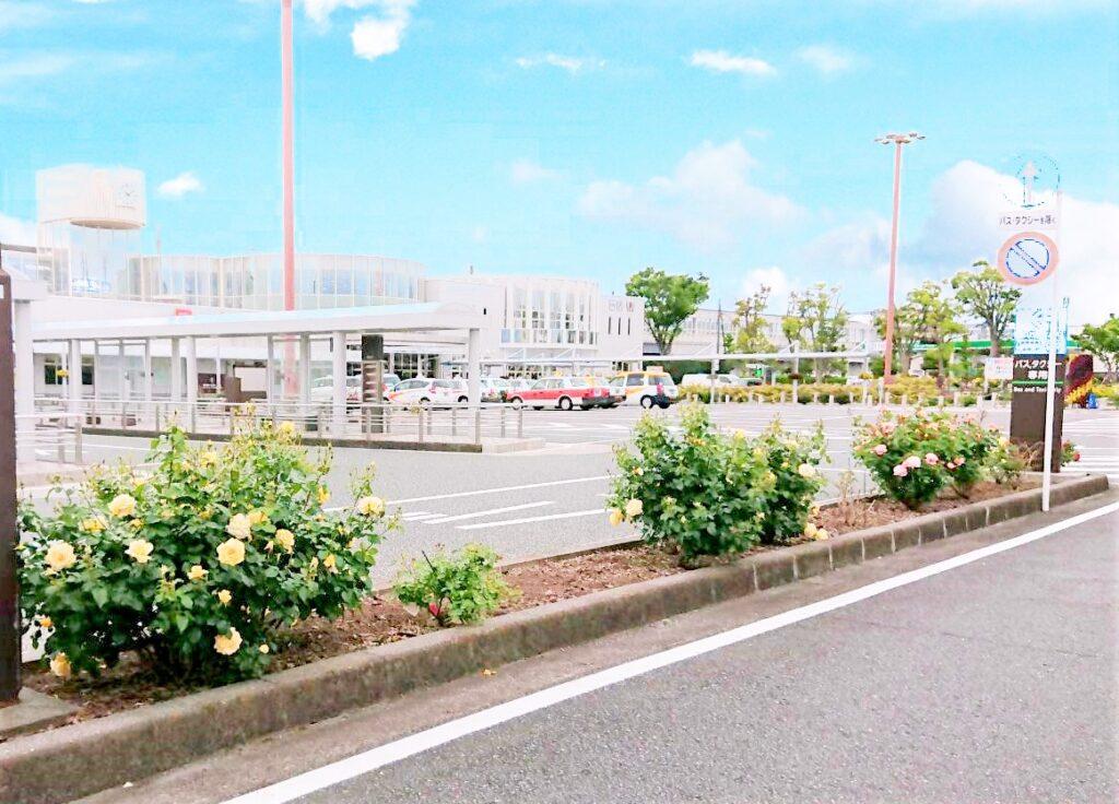 新富士駅のバラ🌹